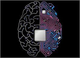 usa brain